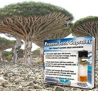Mejor Dragon Tree Seeds