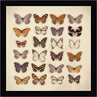 Butterfly Collection by Ian Winstanley 20