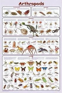 Arthropods Educational Science Teacher Classroom Chart Print Poster 24x36