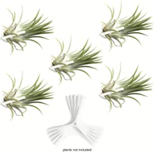 Air Plant Holder for Vertical Garden 5 Pack Wall Planter for House Plants, Hanging Plant and Tillandsia Air Plants Living Wall Terrarium. Great Wall Decorations for Living Room   No plants included W5