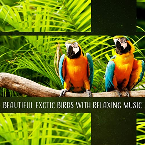 Jungle Noise by Sounds of Nature Kingdom on Amazon Music