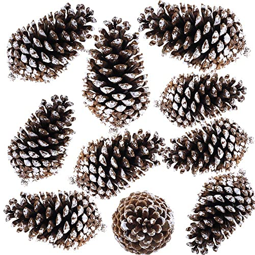 Frosted Pine Cones: Amazon.com