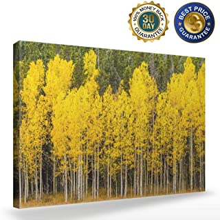 Modern Canvas Wall Art,Stand of Changing Yellow Aspen Tree in Front of Dark Green Pine Trees Artworks Oil Painting,Home Decor Stretched and Framed Ready to Hang,12x16 inch