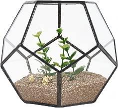 MINGZE Terrarium en Forme de dod/éca/èdre et plaques de Verre pentagonales pour Plante Transparent 11 * 11 * 9CM, Noir Plusieurs Tailles Claire