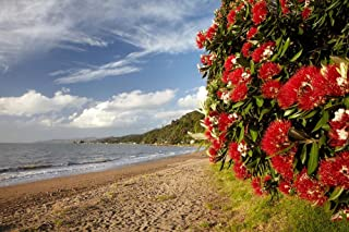 Beach, Pohutukawa, Thornton Bay, No Island, New Zealand by David Wall/Danita Delimont Art Print, 33 x 22 inches