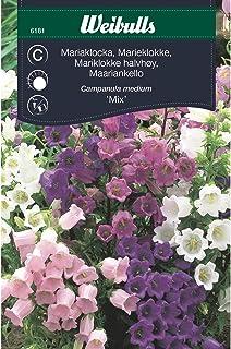 Weibulls Mariaklocka mix
