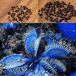 CIOLER Seed House - azul semilla Dionaea muscipula venus Semillas plantas carnívoras
