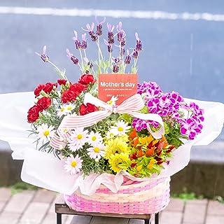 母の日 ギフト 店長おまかせ 母の日専用 季節のおまかせ寄せ鉢 鉢花 お任せ種類でバスケットに鉢花が綺麗に寄せ植えされているのでそのまま飾るだけ (Lサイズ, 5~7種類をおまかせで寄せ鉢)