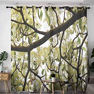 Onefzc Kids Curtains,Farmhouse Dogwood Tree Seeds Bonsai Art Decorations Home Accessories Nature Lover Bright Sky Digital Print,Blackout Window Curtain 2 Panel,W96x72L,Green Brown Off White