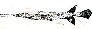 Gar fish Handmade Fish Print