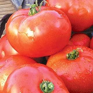 NIKITOVKASeeds - Tomato Slavic Masterpiece - 40 Seeds - Organically Grown - NON GMO