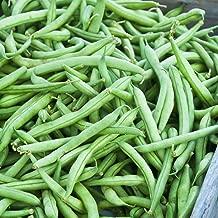 Strike Bush Bean Seeds - Non-GMO, Heirloom Green SNAP - Vegetable Garden Seeds 5 Lbs