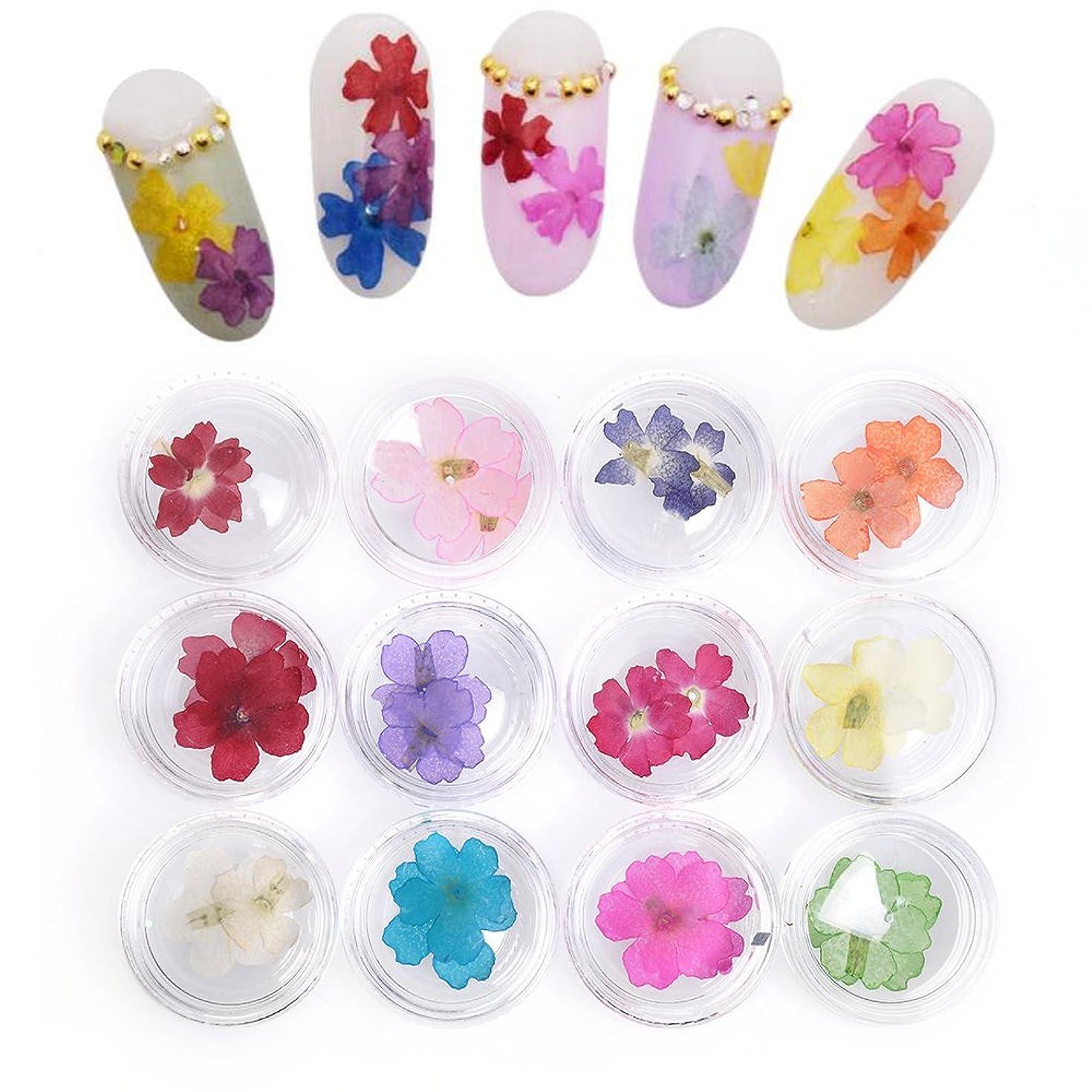 ますます過度に医療過誤Takarafune 押し花 ドライフラワー 葉 3Dネイル レジンデコレーション DIY ネイルパーツ 明収納ケース 12色