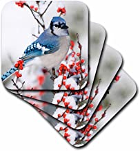 3dRose Blue Jay in Common Winterberry, in Winter, Marion Co. Il - Soft Coasters, Set of 4 (CST_205620_1)