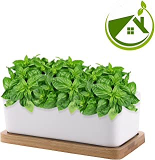 Tiny Herb Garden Set - Kitchen Herbs Seed Assortment Self Grow Indoor Windowsill Kit. Non GMO Heirloom Organic Basil & Asperagus Seeds Vegetable Planter Pots. Unique DIY Gardening Gifts Kids Men Women