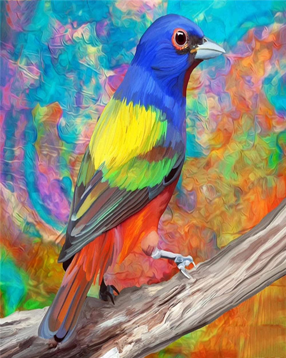 HRKDHBS DIY Oil Paint by Number Pa Bird 40X50Cm with Frame Cheap Clearance SALE Limited time Kit