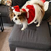 Tie Pajamas and Hat Collar Slider Coat Scarf Great for Family Xmas Card Photos Bow Tie Dress Pooch Outfitters Dog Christmas Outfit Collection