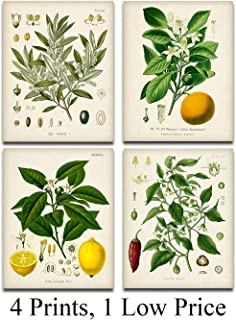Kitchen Botanicals Illustrations - Set of 4 8x10 Unframed Art Prints - Great Kitchen and Dining Room Decor and Gift for Gardeners Under $15