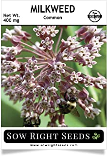 Best butterfly milkweed plants for sale Reviews