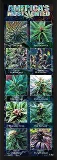 Culturenik Americas Most Wanted Weed Marijuana Novelty Drug Smoking Humor Print (Framed 12x36 Poster)