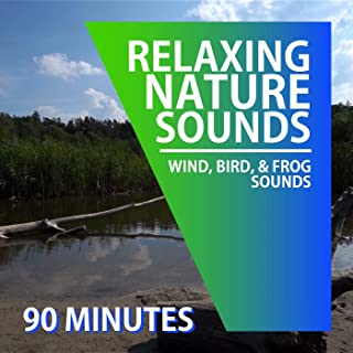 Wind Sounds | Bird Sounds | Frog Sounds | For Sleep, Relaxation, and Concentration (90 Minutes)