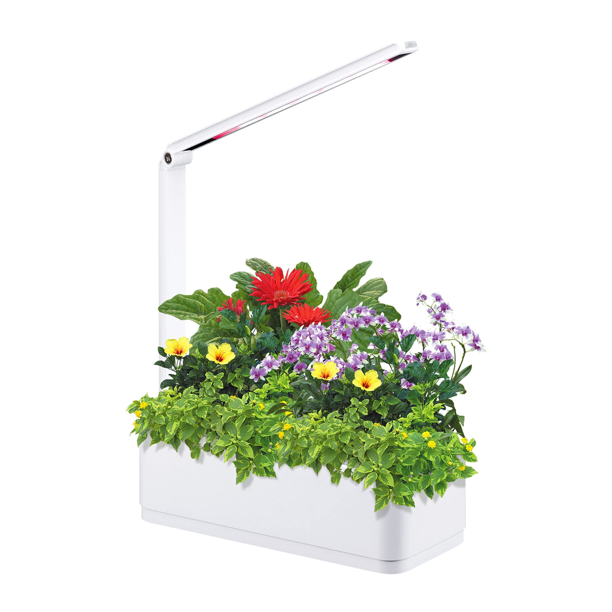 Scottish boy Intelligent Hydroponics Growing System Kit, Indoor Herb Garden with Grow Light Hydroponic Herb Garden