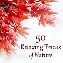 50 Relaxing Tracks of Nature – Autumn, Rain, Deep Meditation, Secret Garden, Spa Therapy, Massage, Instrumental Music, Healing Song