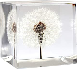 """Dandelion Paperweight Cube - A Real Dandelion Puff! (Cube and Cuboid) (Cuboid (2.25"""" x 2.25"""" x 4""""))"""