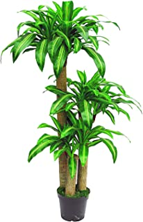 AMERIQUE 5.3 Gorgeous 5' Tropical Dracaena Tree Artificial Silk Plant with UV Protection, with Pot, Feel Real Technology, Super Quality, Feet, Green
