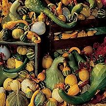 Burpee Ornamental Big Gourds Mix Gourd Seeds 25 seeds