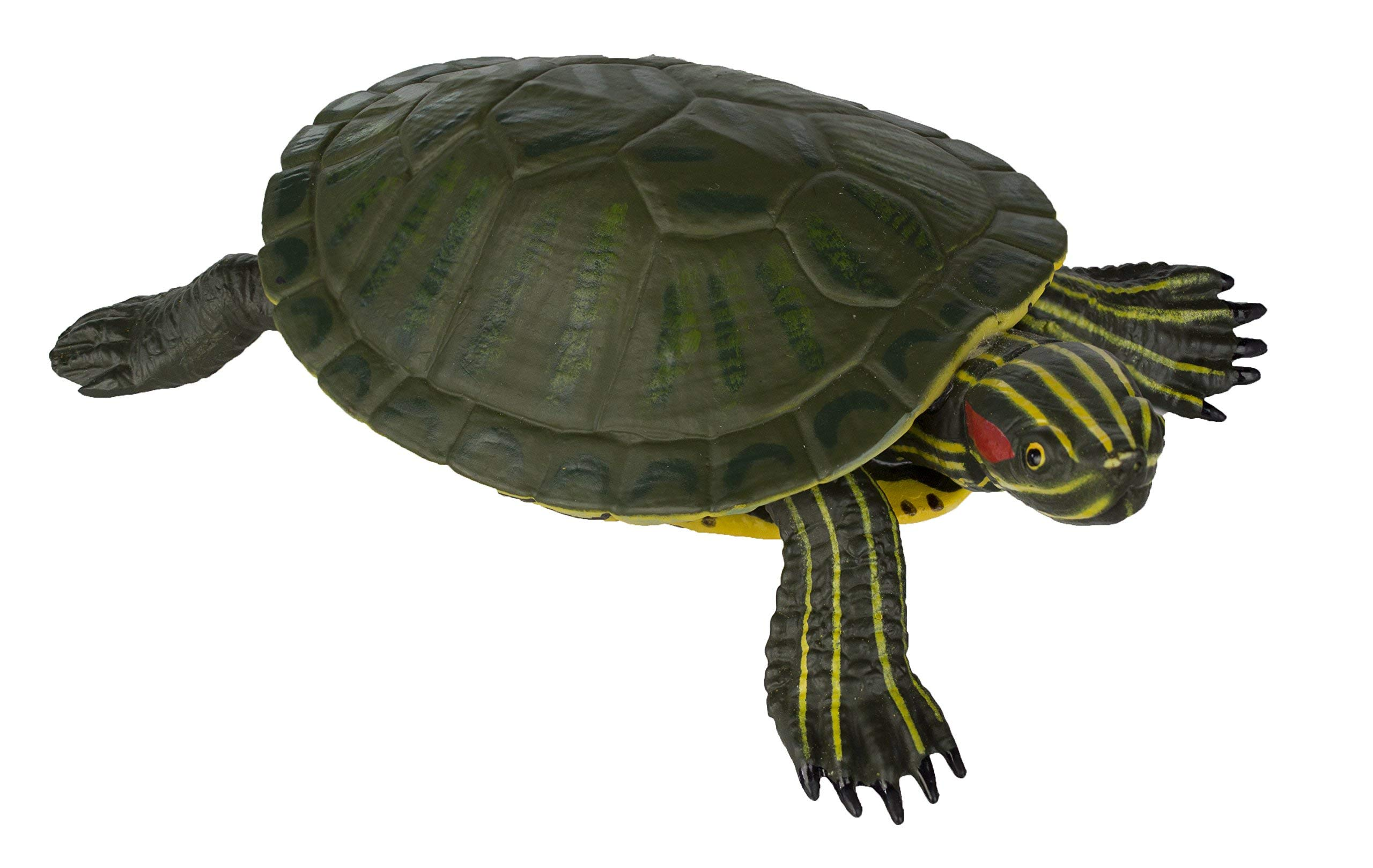 Buy Safari Ltd Red Eared Slider Turtle Online At Low Prices In India Amazon In