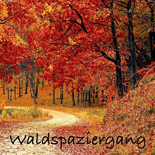 Waldspaziergang - Hängematte für die Seele Titelbild