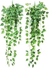 Best wall hanging plants Reviews