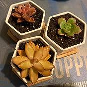 4 Quarts Brown//A .1 Pack Hoffman 10404 Organic Cactus and Succulent Soil Mix