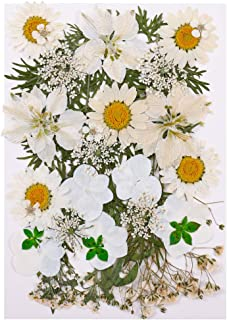 bowsugar Fleurs pressées naturelles et biologiques mixtes, fleurs séchées naturelles pour bricolage Art décorations floral...