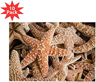Rectangle Magnet (10 Pack) Collection Of Starfish