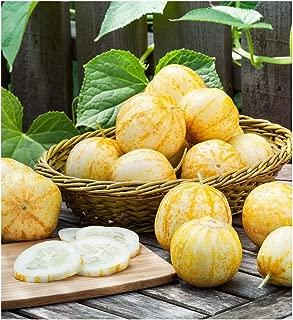 David's Garden Seeds Cucumber Pickling Lemon SL3329 (Yellow) 50 Non-GMO, Heirloom Seeds