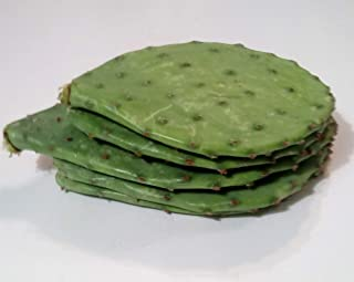 12 Oz FRESH Tortoise Turtle Iguana Reptile SUPER FOOD Spineless Opuntia Prickly Pear Cactus