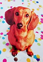 Congratulations To A Real Winner - Cute Funny Greeting Card with Wiener Dachshund Dog