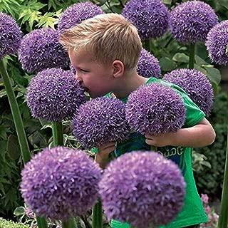 CANHOT Seeds - Giant Allium Giganteum Onion Flower Seeds, Dreamlike Purple Flower for Garden Spring Plant Decoration -30pcs (Blue Purple)