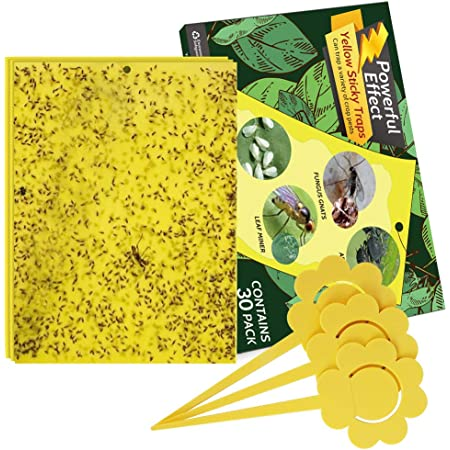 Whiteflies Fruit Fly Wallfire 12 Pack Disposable Yellow Sticky Fruit Fly Traps Dual-Sided Sticky Traps for Flying Plant Insect Such as Fungus Gnats Aphids Leafminers for Indoor//Outdoor Use