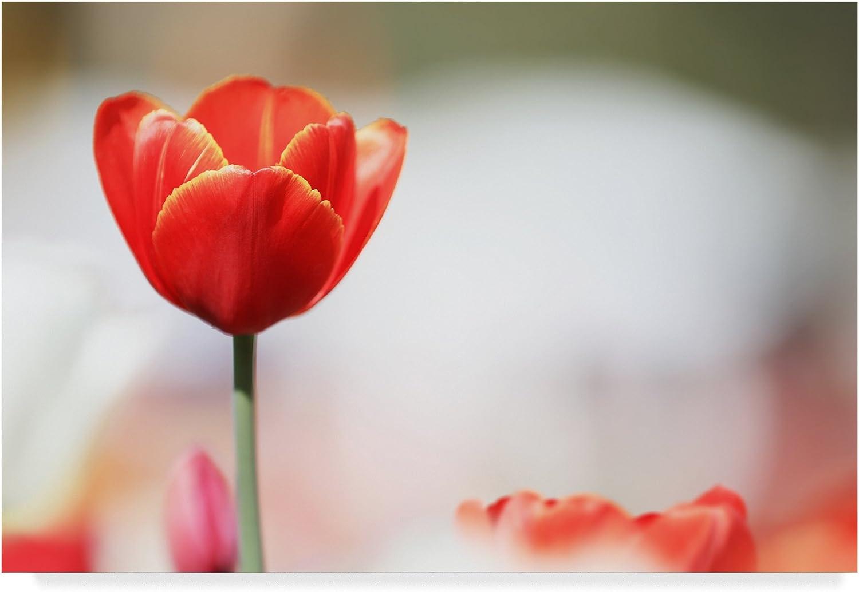 Trademark Fine Art Red Beauty 1 by Incredi 1, 12x19, Multicolor