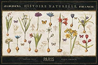 Posterazzi Collection Histoire Naturelle I Poster Print by Pela ERR (18 x 12)