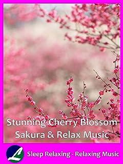 Stunning Cherry Blossom Sakura & Relax Music - Sleep Relaxing - Relaxing Music