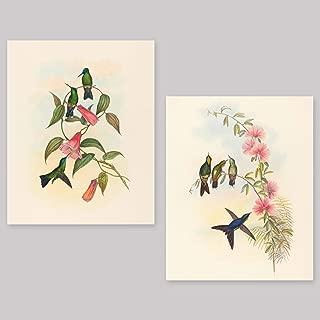 Hummingbird Prints (Botanical Bird Print, Tropical Wall Art) Set of 2-8x10 Unframed