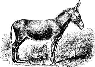 e.x.o.b.o | Notizbuecher: Umfangreiches und exotisches Blanko-Journal mit einzigartiger Vintage-Handzeichnung (Esel)