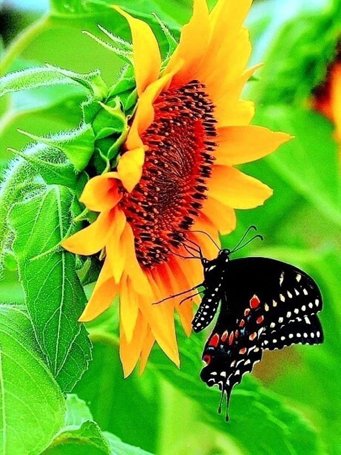 Sunflower Diamond Painting 5D DIY Full Drill Diamond Painting Butterfly Craft Resin Rhineston Animal Pasted Cross Stitch Flower Diamond Mosaic Stickers Canvas For Room Living Wall Decoration , 6080 cm