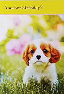cavalier king charles birthday cards