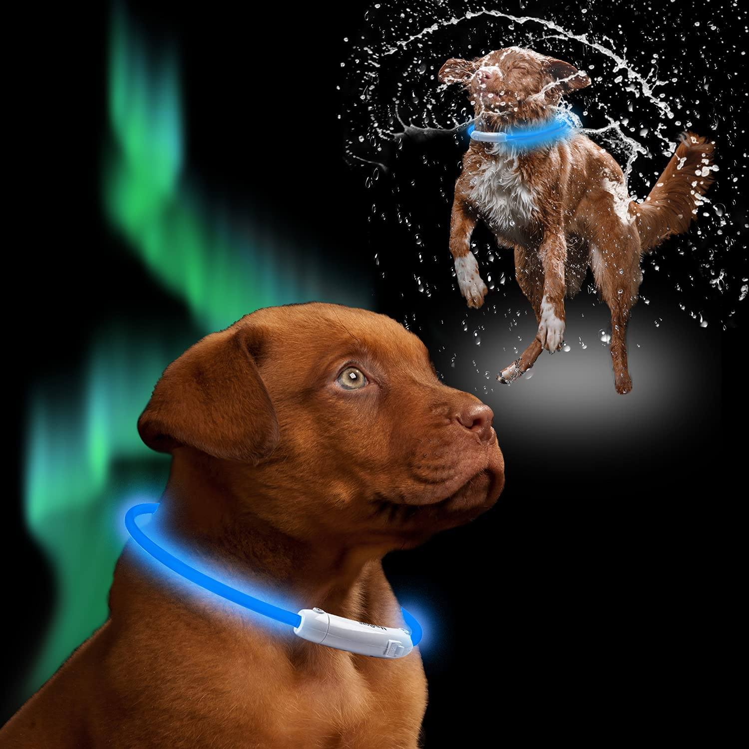 Fashion Mayroxe NEW LED Dog Collar Rechargeable Collars Light Safety Up