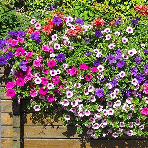 Big Promotion !!! 200+ Couleur mixte vivace Petunia Graines dans les graines de fleurs d'intérieur Bonsai pour jardin Bonsai Usine Décoration Jaune